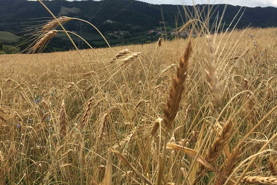 Borgo degli gnomi, Cereali integrali e farine macinate a pietra